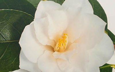 Gift for Refuges at Camellia House